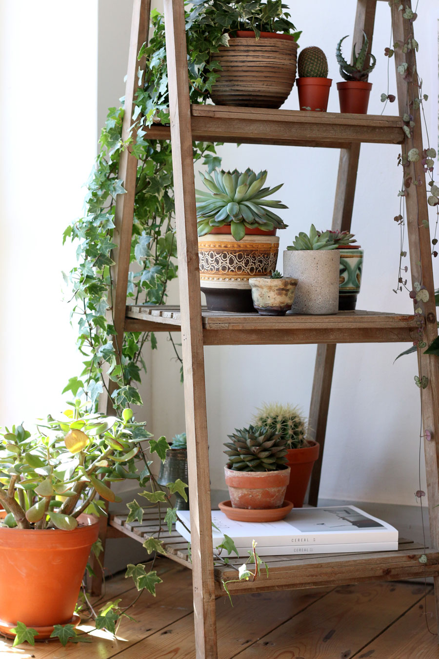 How-to-display-indoor-plants-6