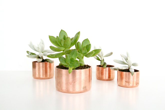 copperplanters3