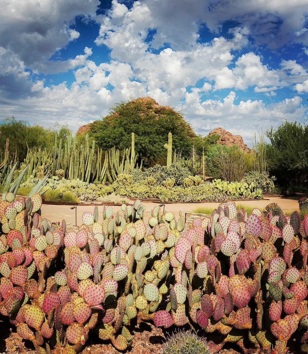 Phoenix, Arizona Travel Guide: Desert Botanical Garden Phoenix AZ